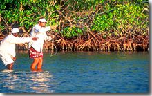 Flyfishing for Permit in the Mangrove